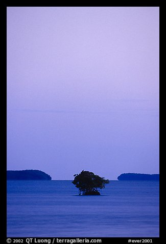 Mangroves trees and low islands in Florida Bay, dusk. Everglades National Park (color)