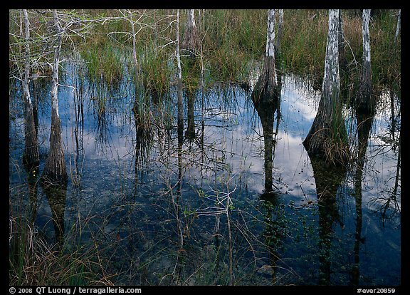 Cypress reflexions near Pa-hay-okee. Everglades  National Park (color)