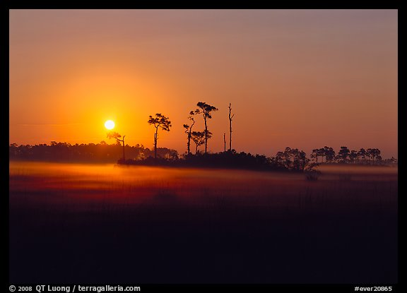 Pine trees and fog at sunrise. Everglades  National Park (color)