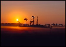 Pine trees and fog at sunrise. Everglades  National Park ( color)