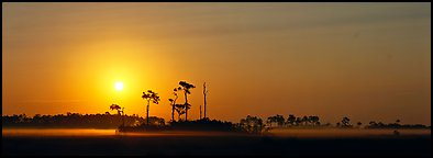 Landscape of pine trees and grasslands at sunrise. Everglades National Park, Florida, USA.