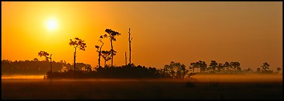 Sunrise landscape with mist on the ground. Everglades National Park, Florida, USA.