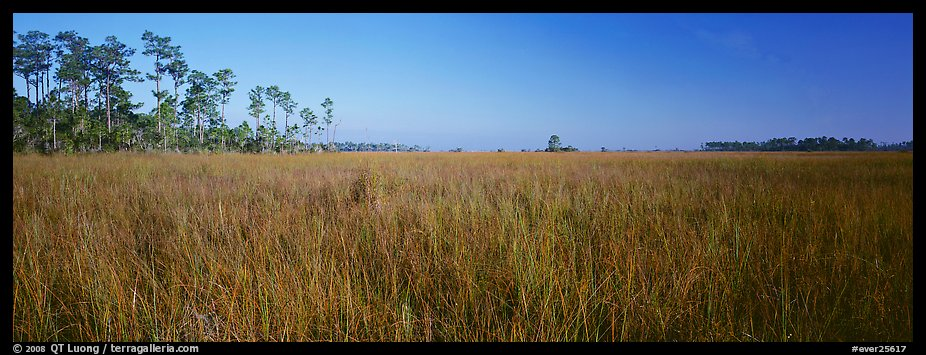Sawgrass landscape. Everglades National Park (color)