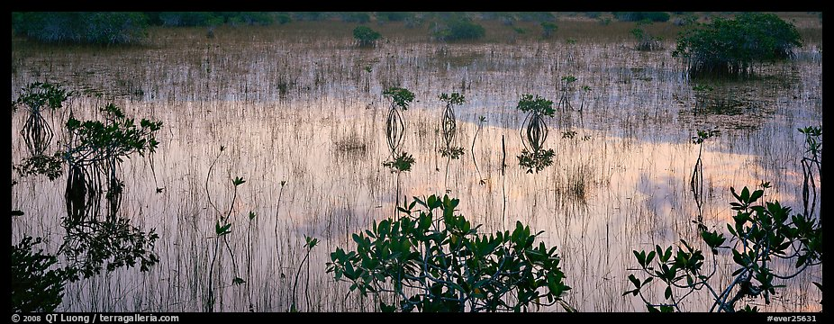 Mangroves and reflections. Everglades National Park (color)