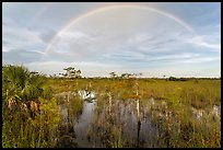 Double rainbow over dwarf cypress forest. Everglades National Park, Florida, USA. (color)