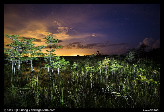Dwarf cypress at night, Pa-hay-okee. Everglades National Park (color)