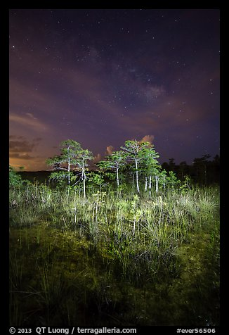 Dwarf cypress and stars at night, Pa-hay-okee. Everglades National Park (color)
