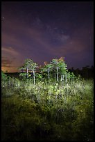 Dwarf cypress and stars at night, Pa-hay-okee. Everglades National Park ( color)