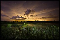 Sawgrass and dwarf cypress at night. Everglades National Park, Florida, USA. (color)