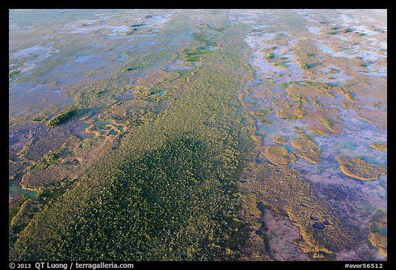 Aerial view of hardwood hammock. Everglades National Park (color)