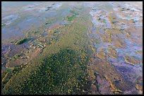 Aerial view of hardwood hammock. Everglades National Park, Florida, USA. (color)