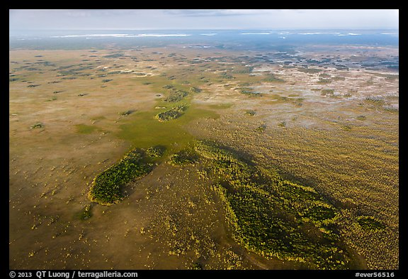 Aerial view of marsh with cypress. Everglades National Park (color)