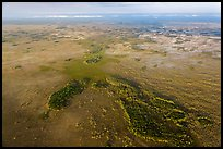 Aerial view of marsh with cypress. Everglades National Park, Florida, USA. (color)