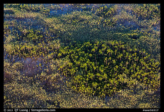 Aerial view of pine trees. Everglades National Park (color)