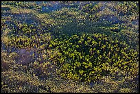 Aerial view of pine trees. Everglades National Park, Florida, USA. (color)