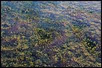 Aerial view of pineland. Everglades National Park, Florida, USA. (color)
