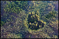 Aerial view of a cypress hole. Everglades National Park, Florida, USA. (color)