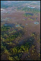 Aerial view of cypress and pines. Everglades National Park, Florida, USA. (color)