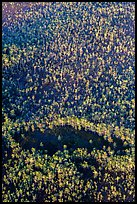 Aerial view of cypress forest. Everglades National Park, Florida, USA. (color)