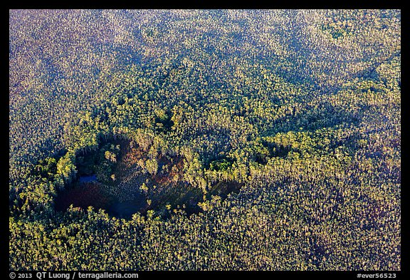 Aerial view of hole in dense cypress forest. Everglades National Park (color)