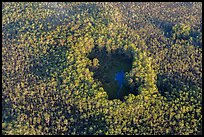 Aerial view of cypress hole. Everglades National Park, Florida, USA. (color)