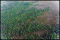 Aerial view of mangroves. Everglades National Park, Florida, USA. (color)