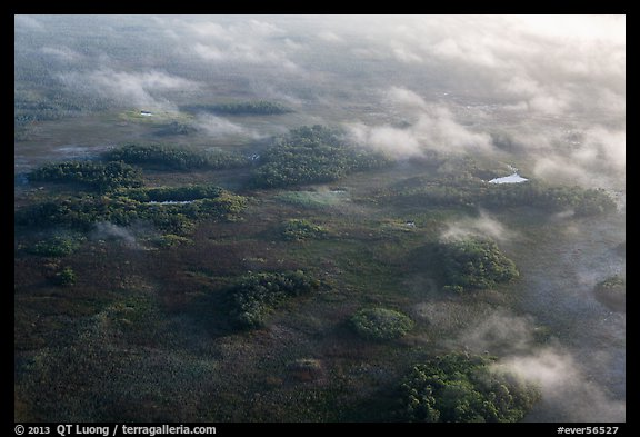 Aerial view of subtropical marsh, trees, and fog. Everglades National Park (color)