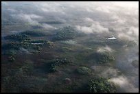 Aerial view of subtropical marsh, trees, and fog. Everglades National Park, Florida, USA. (color)