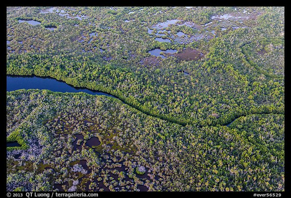 Aerial view of river and mangroves. Everglades National Park (color)
