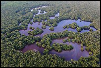 Aerial view of mangrove forest mixed with ponds. Everglades National Park, Florida, USA. (color)