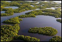 Aerial view of maze of waterways and mangrove islands. Everglades National Park, Florida, USA. (color)