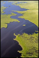 Aerial view of dense mangrove coastline and inlets. Everglades National Park, Florida, USA. (color)