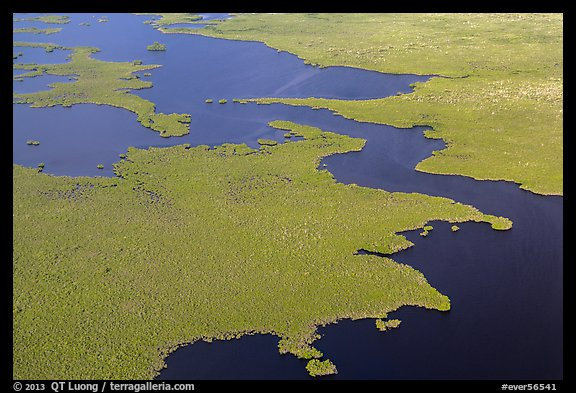 Aerial view of tropical mangrove coast. Everglades National Park (color)