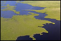 Aerial view of tropical mangrove coast. Everglades National Park, Florida, USA. (color)