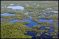 Aerial view of lakes, mangroves and cypress. Everglades National Park, Florida, USA. (color)
