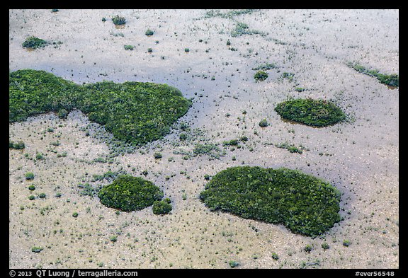 Aerial view of mangroves and cypress. Everglades National Park (color)