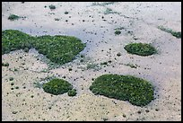 Aerial view of mangroves and cypress. Everglades National Park, Florida, USA. (color)