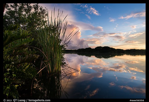 Paurotis pond and reflections. Everglades National Park (color)