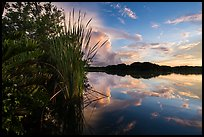 Paurotis pond and reflections. Everglades National Park, Florida, USA. (color)