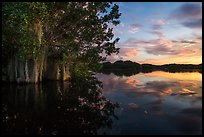 Trees with Spanish Moss in Paurotis Pond at sunset. Everglades National Park, Florida, USA. (color)