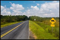 Road with Florida Panther sign. Everglades National Park, Florida, USA. (color)