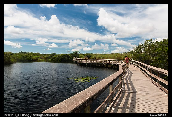 Visitor looking, Anhinga Trail boardwalk. Everglades National Park (color)