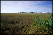 Sawgrass prairie and distant pines near Mahogany Hammock, morning. Everglades National Park, Florida, USA.