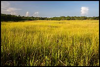 Prairie and hammocks, Shark Valley. Everglades National Park ( color)