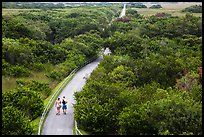 Trail and tram road, Shark Valley. Everglades National Park ( color)