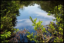 Pond surrounded by vegetation, Shark Valley. Everglades National Park ( color)