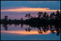 Pines reflected at sunset, Pines Glades Lake. Everglades National Park ( color)