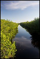 Canal lined up with mangroves. Everglades National Park ( color)