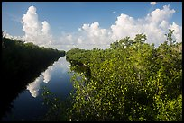 Buttonwood Canal and clouds. Everglades National Park ( color)