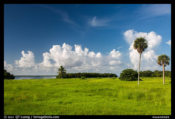 Coastal prairie, Flamingo. Everglades National Park (color)